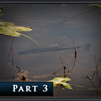 The Definitive Guide to Bed Fishing – Part III