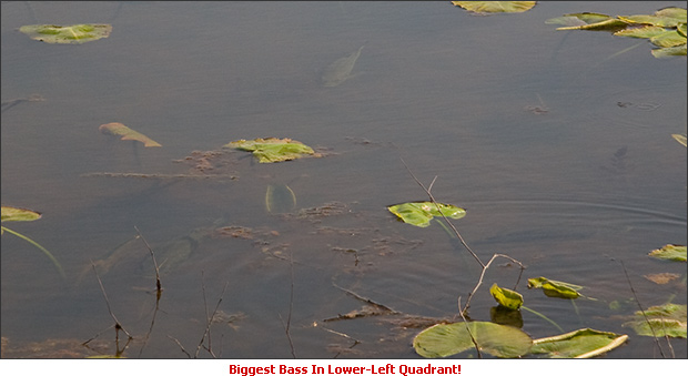 Less Obvious Spawning Bass